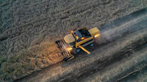 Mardin'de bu sezon 800 bin ton buğday üretildi