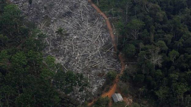 Amazon'da yasa dışı ağaç kesimine karışmakla suçlanan Brezilya Çevre Bakanı istifa etti