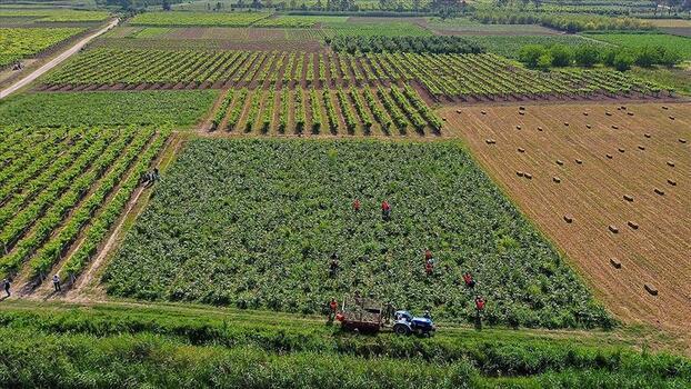 Çiftçi Kayıt Sistemi'ne 2021 başvuru döneminde son haftaya girildi