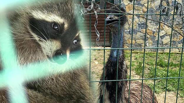 Silivri'de ticareti yasaklanan hayvan satanlara operasyon!
