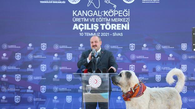 Bakan Varank, Sivas kangal köpeğinin ırkını koruyacak merkezin açılışını yaptı