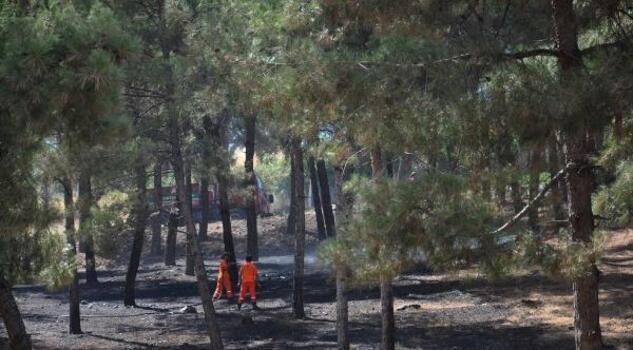 İslahiye'de ormanlık alandaki yangın söndürüldü