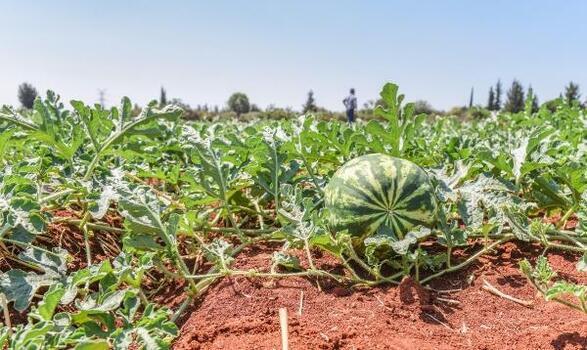 Tütüncü'den ilk hasat paylaşımı