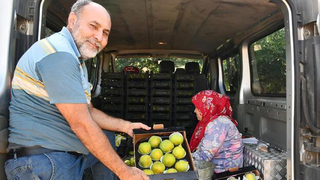 Manisa'da erkenci yediveren incirinde üretici ihracata yöneldi