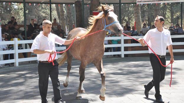 'Kuzgun Efe' açık artırmayla 315 bin TL'ye satıldı