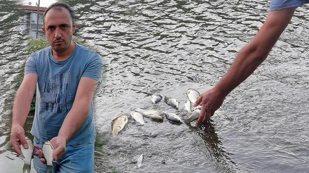 Son dakika... Bursa'da korkutan görüntü! Balık ölümleri halkı tedirgin etti