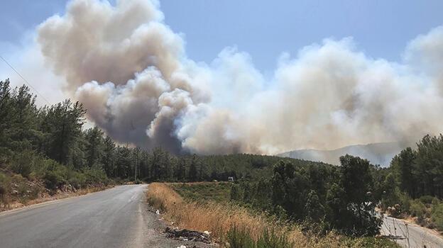 Milas ve Didim'de de orman yangınları çıktı