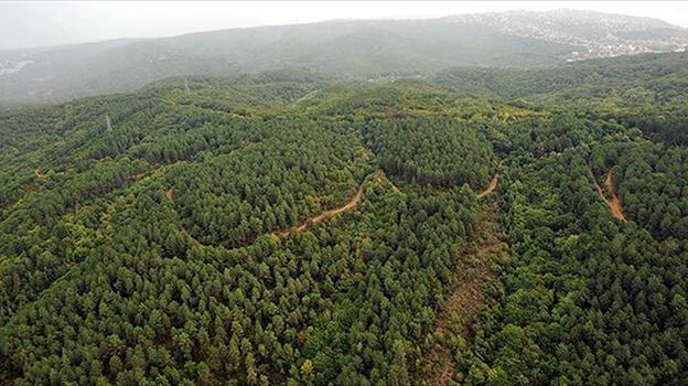 Son dakika: Valilik duyurdu! Ormanlara giriş 3 ay yasaklandı