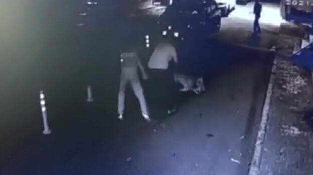 Korkunç olay! Sokak kedisini Pitbull'a öldürttü...