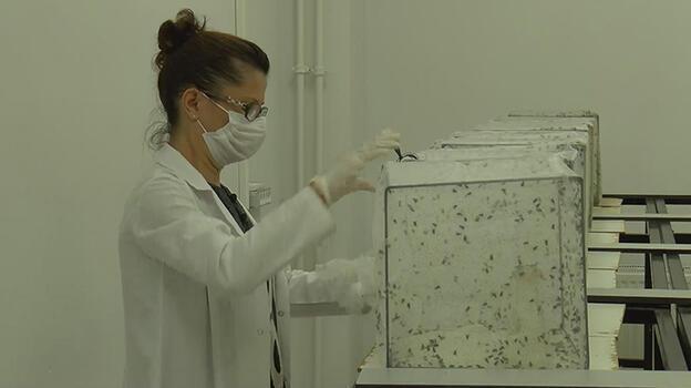 İBB ve uzmanlar arasında sivrisinek ilaçlama tartışması