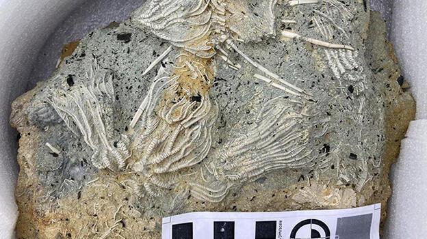 Dinozorlar döneminden yeni kalıntı! Diri diri gömüldüler