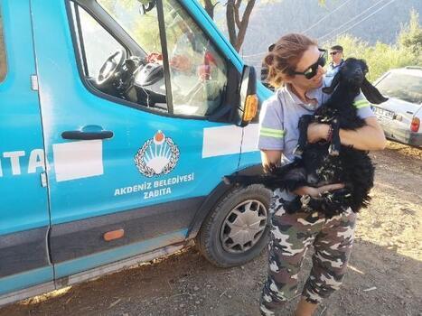 Akdeniz Belediyesi, yangına karşı seferberliğini sürdürüyor
