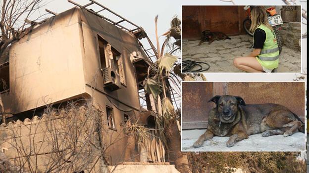 Manavgat'tan acı kare! Ölen çiftin köpekleri evin önünden ayrılmıyor