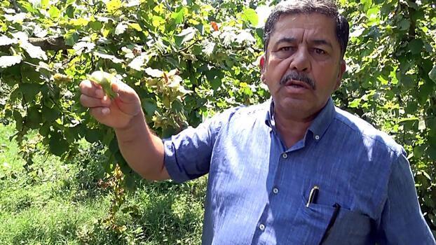 Fındık üreticilerine 'hasat' uyarısı