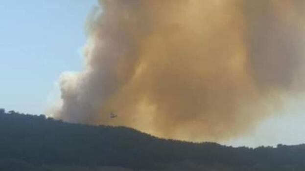 Son dakika... Adana'da orman yangını! Havadan karadan müdahale ediliyor