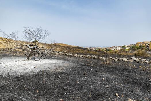 Yerküre orman yangınlarının etkisi altında