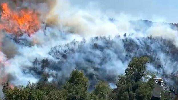 Aydın'da çıkan orman yangını Muğla'ya sıçradı