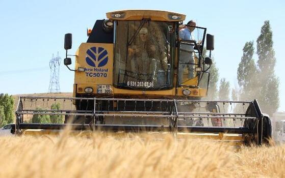Sivas'ta buğday hasadı başladı, 3 milyon dekar biçiliyor