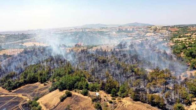 Uşak'taki orman yangınında 8 hektar alan yandı
