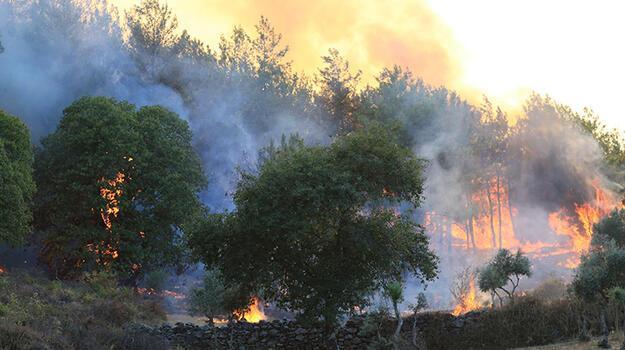 Orman Genel Müdürlüğü'nden flaş açıklama!160 yangın kontrol altında