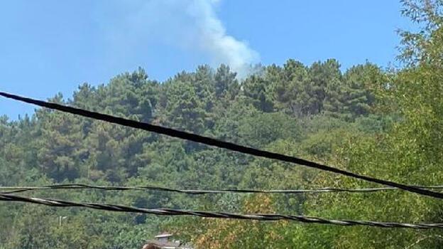 Son dakika! Beykoz'da ormanlık alanda yangın