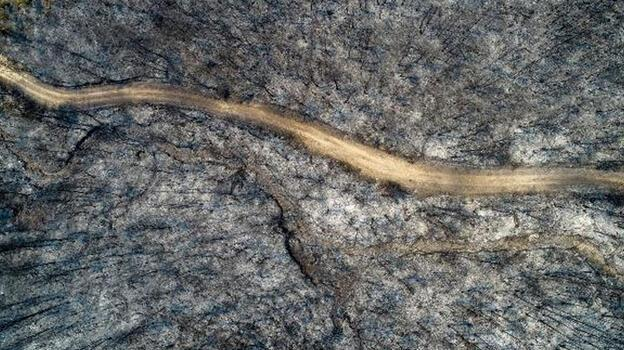 Ormanlık alan çölleşti! Yangın bölgesinde son durum...
