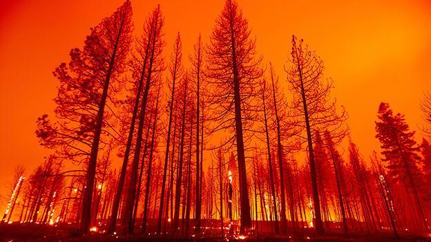 ABD'de 3 haftadır devam eden orman yangını tekrar büyüyor!