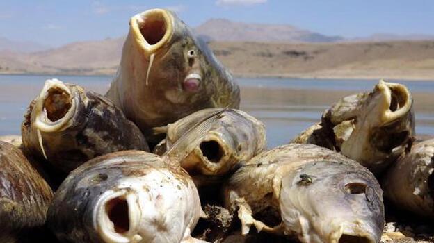 KoçköprüBaraj Gölü'ndeki balık ölümlerinin nedeni belli oldu