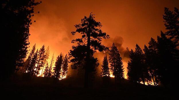 ABD'de devam eden ormanları 'dünyanın en büyük ağaçlarını' tehdit ediyor
