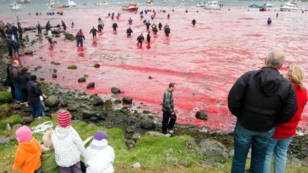 Tepki çeken balina avı görüntüleri için resmi açıklama geldi