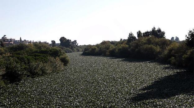 Nehrin üzerinde oluştu! Görsel şölen
