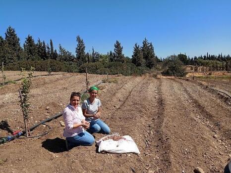 Kadın çiftçiler safranla buluştu