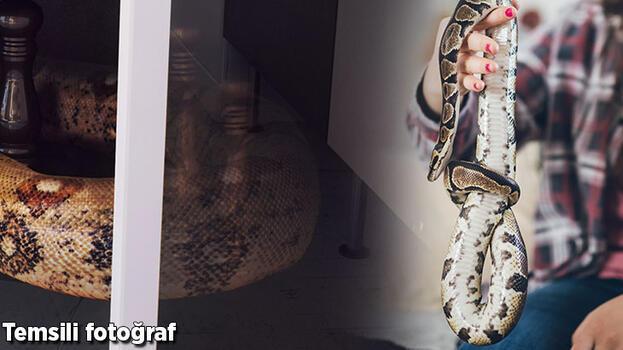 Evde boa yılanı beslemek istedi!Mahkemelik oldu