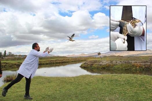 Tedavi edilen balıkçıl kuşu doğaya bırakıldı