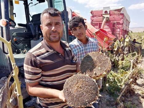 Kayseri'de ay çekirdeği hasadı devam ediyor