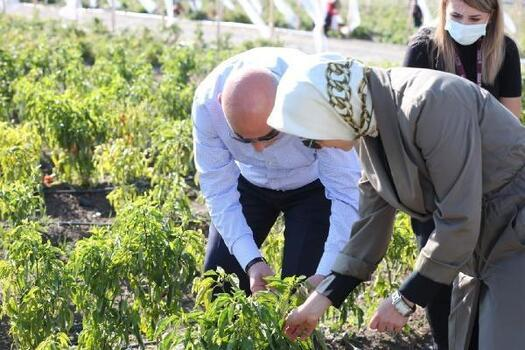 Keçiören'de ata tohumunun mahsulleri hasat edildi