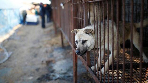 Güney Kore köpek eti tüketimini yasaklamaya hazırlanıyor