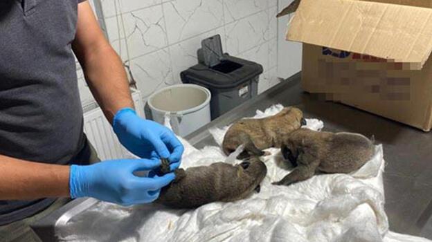 Eskişehir'de, çuval içinde 2'si ölü 7 yavru köpek bulundu