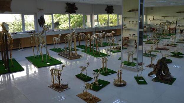 Türkiye'nin tek zürafa iskeleti, Elazığ'daki Anatomi Müzesi'nde
