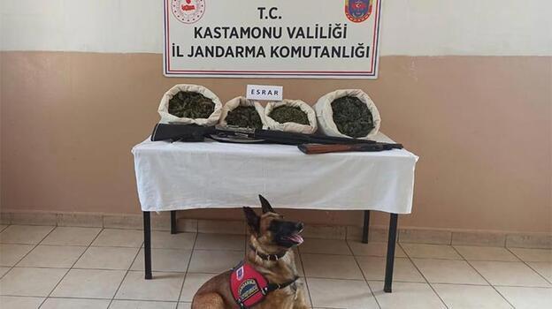 Evinde uyuşturucu yetiştiren zehir taciri tutuklandı