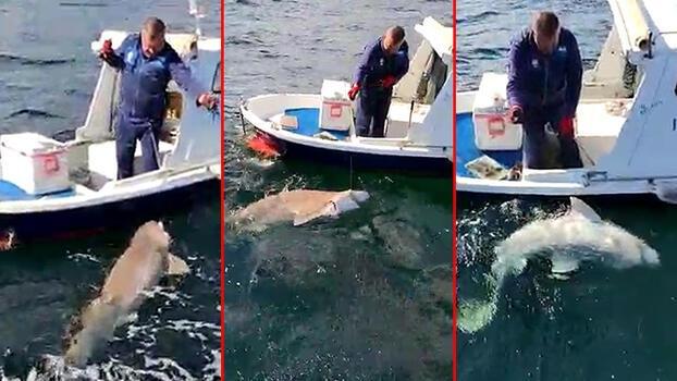 2,5 metre boyunda köpek balığı yakaladı!