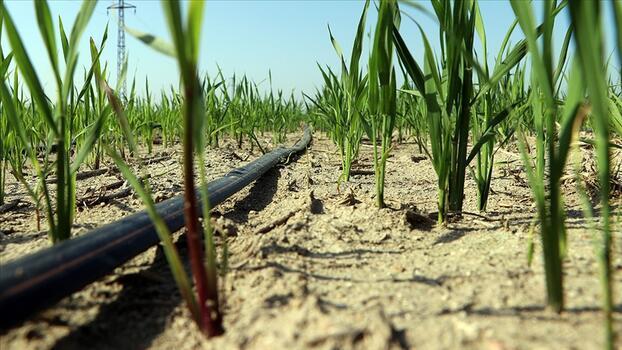 'Suya göre tarım' başladı! Hem tasarruf hem verimlilik arttı