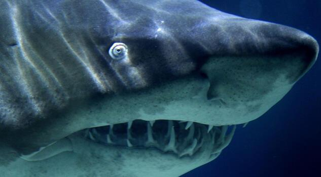 Köpek balığı saldırısına uğrayan 34 yaşındaki adam ağır yaralandı