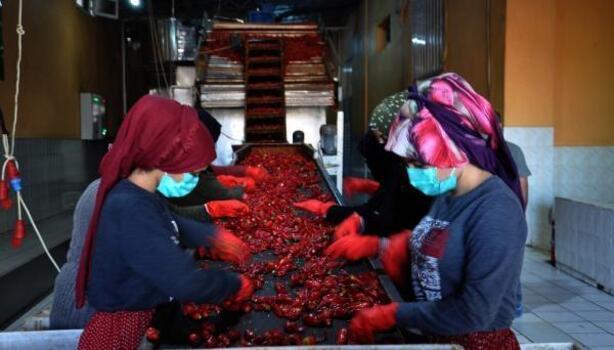 Gaziantep'ten 50 ülkeye pul biber ihracatı