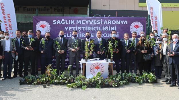 Bursa'nın atıl toprakları 'süper meyve aronya' ile değerlenecek