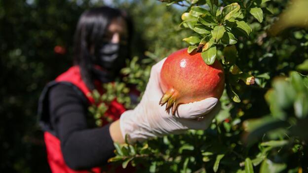 Antalya'nın tarımsal ürünleri 'gıda güvenliği' hassasiyetiyle tüketiciye ulaşıyor