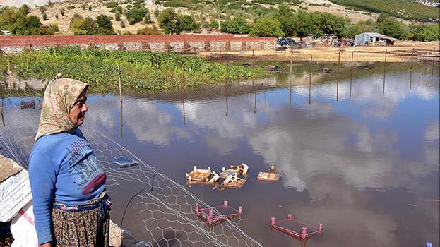Muğla'da şiddetli yağış; tarım arazilerini su bastı, hayvanlar öldü