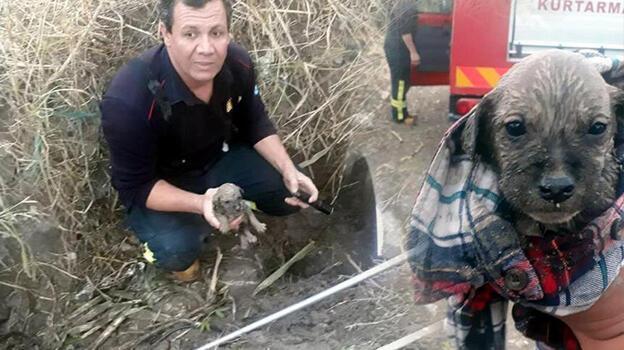 Menfezde mahsur kalan 7 yavru köpek kurtarıldı