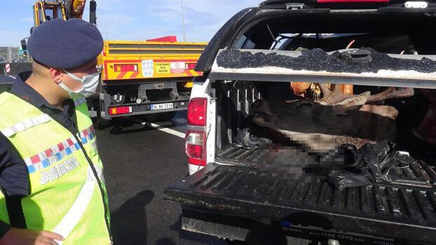 Kaza yaptıkları araçlarından geyik çıktı! 2 avcıya ceza yağacak