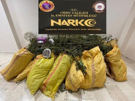 Ordu'da uyuşturucu operasyonu: 3 gözaltı